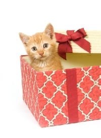 Hasn't your cat been good this year?