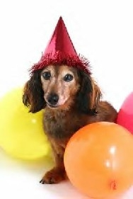 A dog theme for a pet's birthday party can lead to fun and frisky frolics
