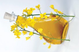 Canola oil is considered to be healthy by most nutritional authorities.