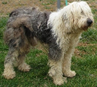 Knotted and matted dog fur can lead to infection.