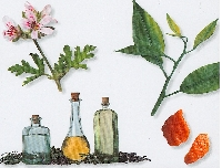 Use 'Scentsibility': select natural and organic aromatheraphy fragrances