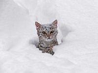 Tips for cats and cold weather and protecting pets from the elements
