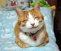Understanding cat emotions will help you and your cat communicate