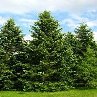 Understanding what is an arborist includes understanding how to become one
