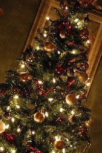 The perfect christmas tree can be yours this holiday season