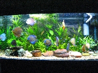 Do some research when starting an aquarium so you won't be a fish out of water