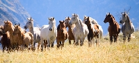 If you care about horses, you should know about the SAFE Act