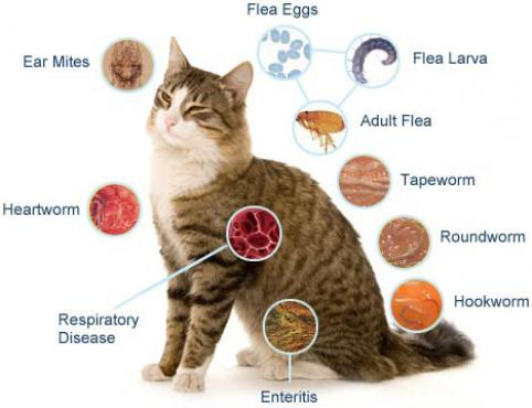 Learn how to get rid of worms in a cat at home safely with the right products