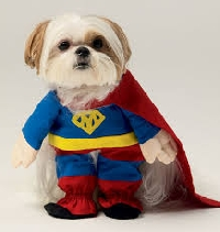 Here's how to get your dog to wear a costume without a struggle