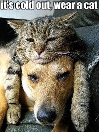 Knowing how to keep pets warm in winter takes some effort on the part of humans