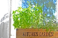 Bring the garden inside when you grow herbs in your kitchen