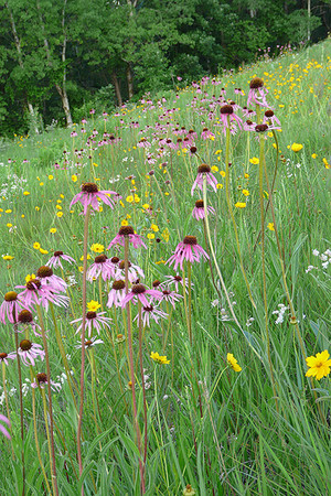 Choosing a wildflower mix for your garden is a breeze