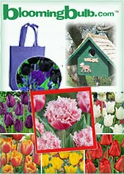Picture of flower bulbs for sale from Blooming Bulb catalog