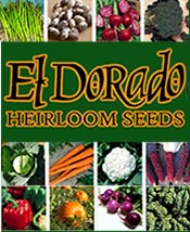 Picture of heirloom seed catalogs from El Dorado Heirloom Seeds catalog