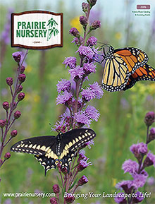 Picture of prairie nursery catalog from Prairie Nursery catalog