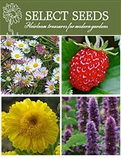 Picture of Select Seeds catalog from Select Seeds catalog
