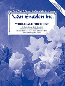 Picture of van engelen from Van Engelen - John Scheepers catalog