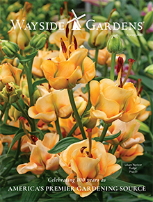Picture of wayside gardens coupon from Wayside Gardens - J&P Park Acquisitions catalog