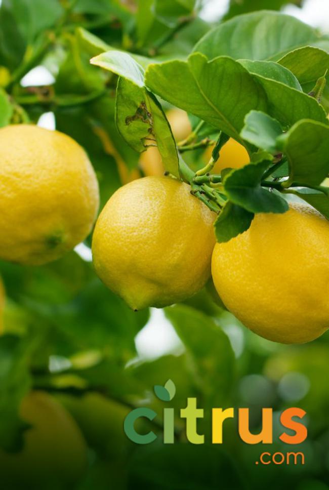 Citrus.com Catalog Cover