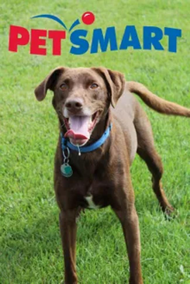 Pet Smart Catalog Cover