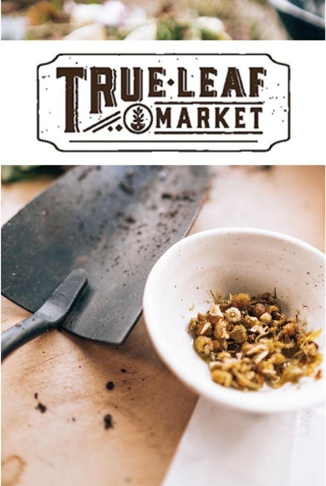 True Leaf Market Catalog Cover