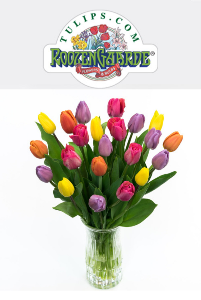 Tulips.com Catalog Cover