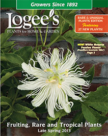 Picture of outdoor container plants from Logee's Greenhouse catalog