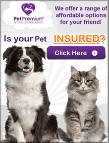 Picture of petpremium insurance quote catalog from PetPremium Insurance Quote catalog