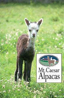 Picture of alpaca sweaters from Mt. Caesar Alpacas catalog