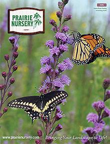 Picture of prairie nursery catalog from Prairie Nursery catalog